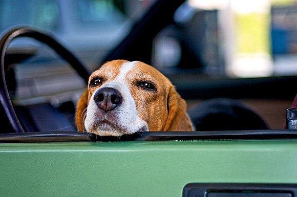 Image result for Dogs Make Me Smile  public domain