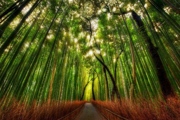 bamboo2-600x400