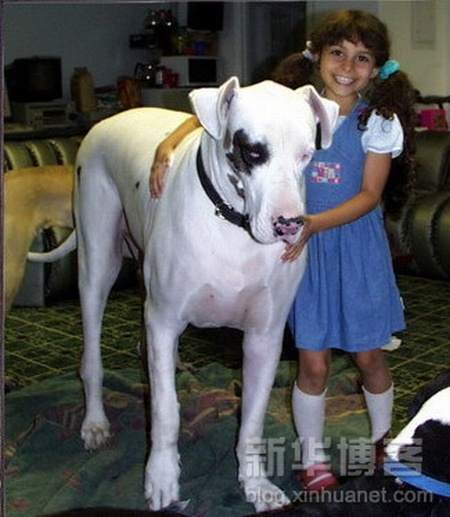 Biggest Dogs In The World   World inside pictures