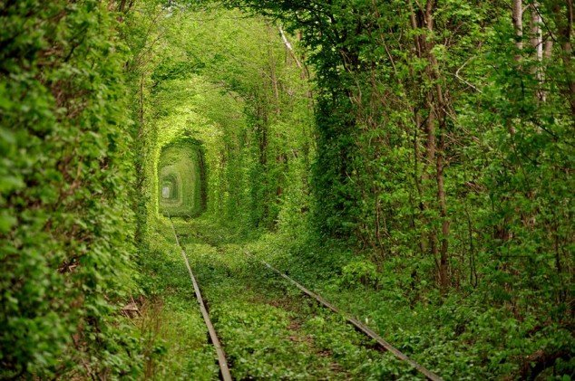 This-beautiful-train-tunnel-of-trees-called-the-Tunnel-of-Love-is-located-in-Kleven-Ukraine.-Photo-By-Oleg-Gordienko-634x421