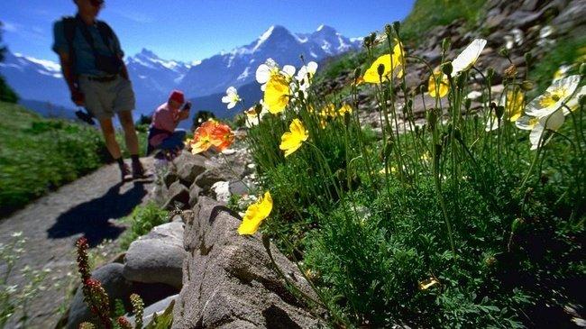 Berner Oberland Sommer