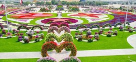 Dubai Miracle Garden – World's Largest Natural Flower Garden