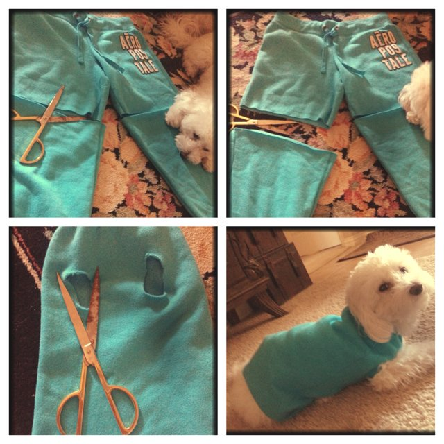 Diy dog clothes no sew for How to make a shirt for your dog