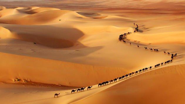 camel-train-josh-owens