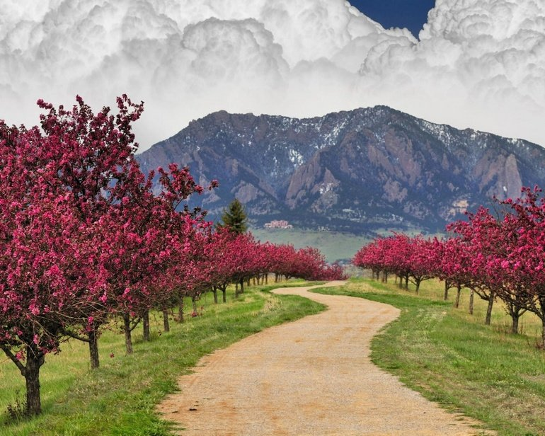 22 Beautiful Places To See The Signs Of Spring The Frugal Hiker