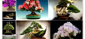 Useful Tips How to Care For a Lovely and Precious Bonsai Tree