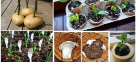 10 Outstanding Gardening Hacks That Will Make Your Garden Work Fun And Easier