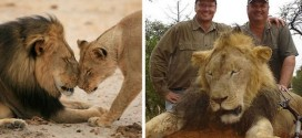 Internet Outrage Forces The The Dentist To Close His Dental Office After He Was Named As The Hunter Who Killed Cecil The Famous Lion