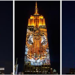 Cecil The Lion Featured on Empire State Building Into Stunning Light Display