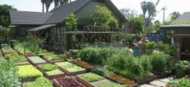 Awesome: Learn How This Family Grows 6,000 Lbs Of Food on Just 1/10th Acre