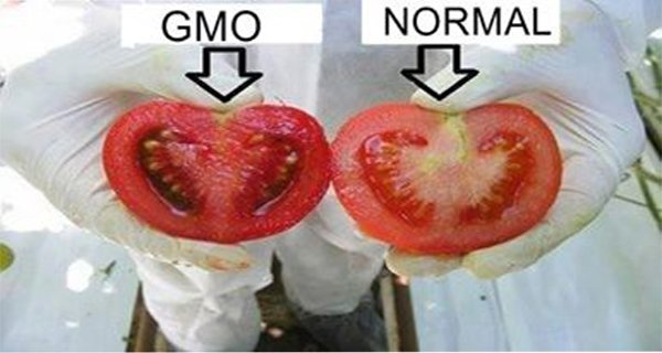 Useful Tips How To Identify Genetically Modified Food In The Shops And Markets