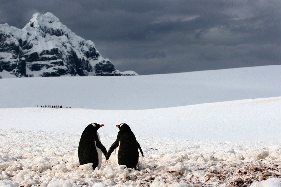 9 Incredibly Heart warming Photographs That Prove Love Is All Around Us