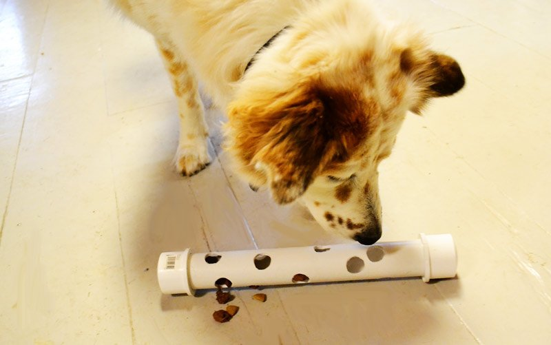 Great Hacks That Make Owning A Dog Much Easier