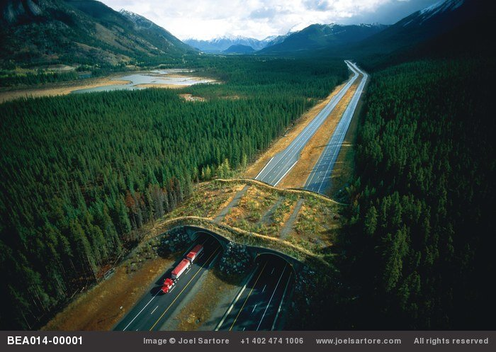 An overpass for wildlife (including bears) was built over this busy highway near Banff, Canada. (Image ID: BEA014-00001)