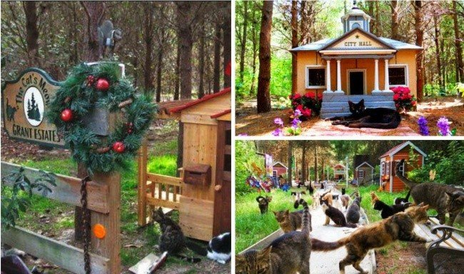 World Is Giving Back The Faith: Creative Constructions For Animals Safe