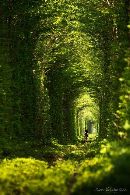 288 Green natural tunnel, Klevan City - Ukraine - Copy