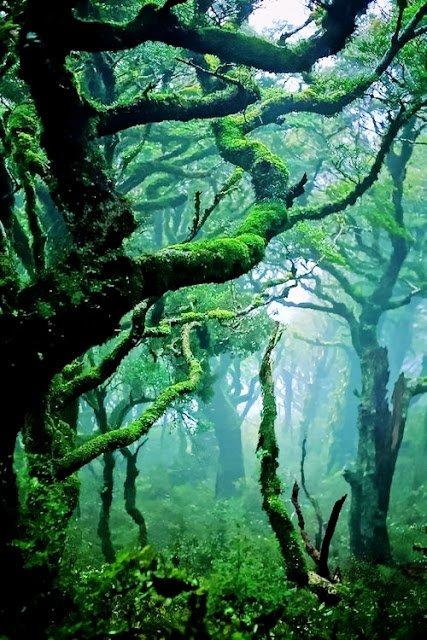 Beautiful Nature - Copy