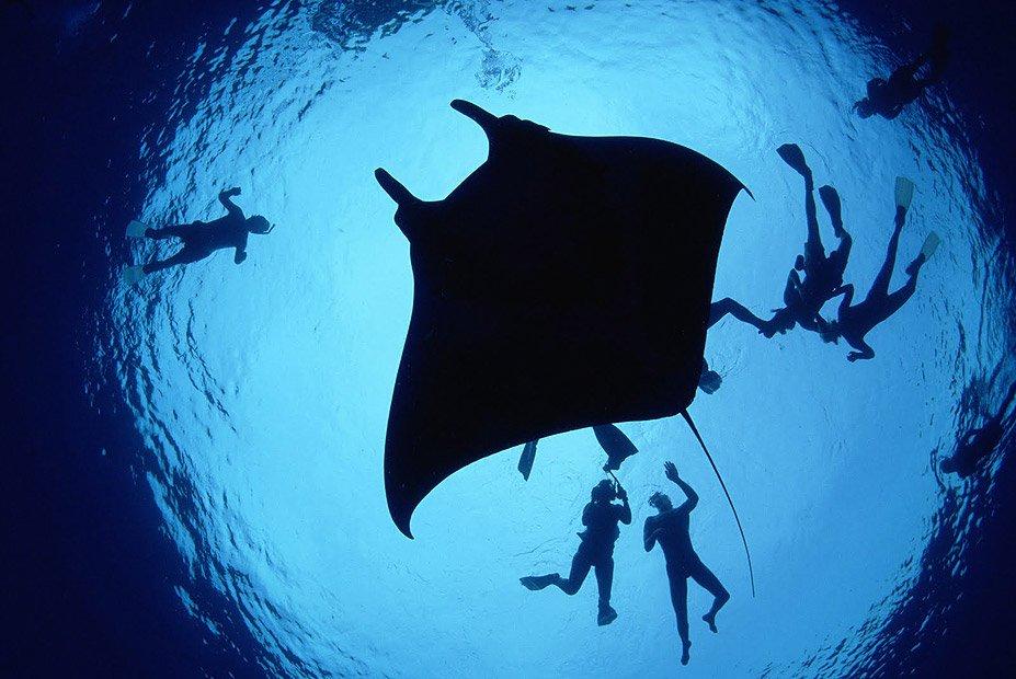 Manta-Ray-Lagoon-Hawaii