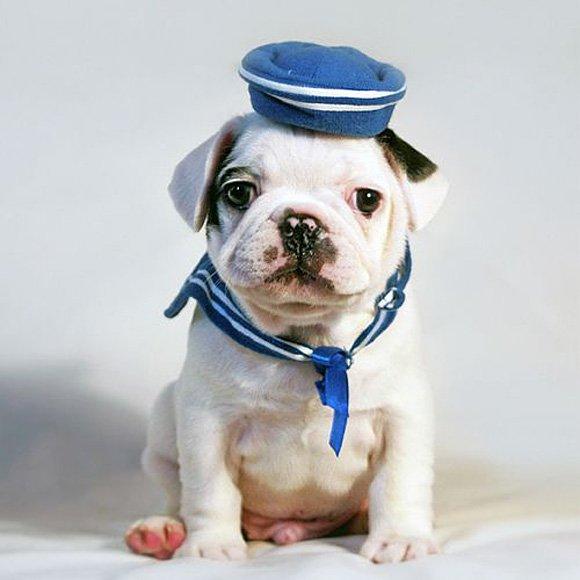 Puppy-Sailor-l