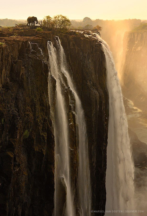 The Edge, of an elephant at Victoria Falls, Zambia and Zimbabwe
