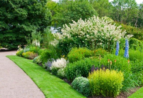 flowers-plants-trees