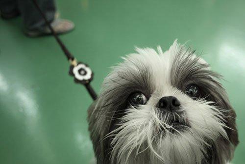Cute_Prisoner_by_pandashekk