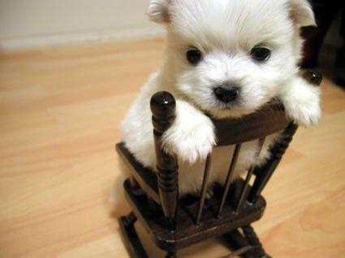 Cute_little_puppy_by_emothe