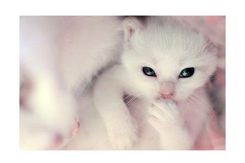 Hello__little_white_kitten_