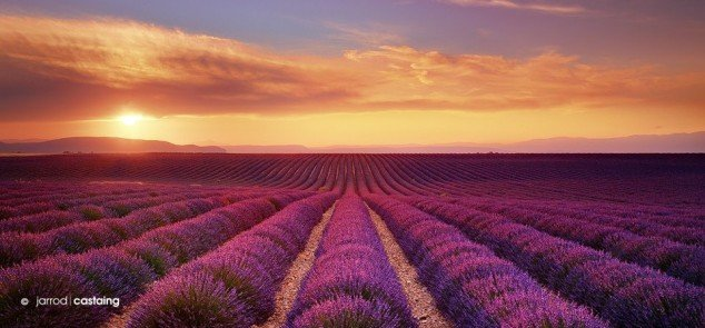 Sunset-Over-Lavender-Fields-Valensole-Provence-France.-Photo-by-Jarrod-Castaing.-634x295