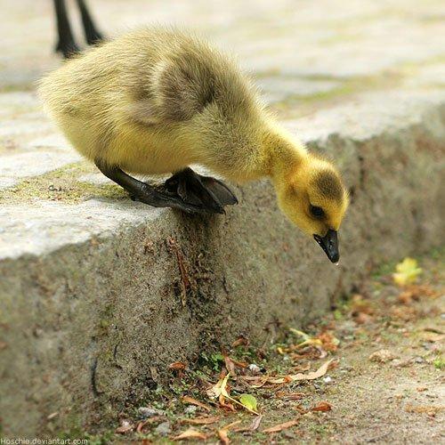 be_gutsy_gosling_by_hoschie