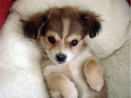cute-dog-16