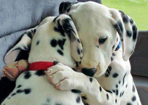cute-dog-8