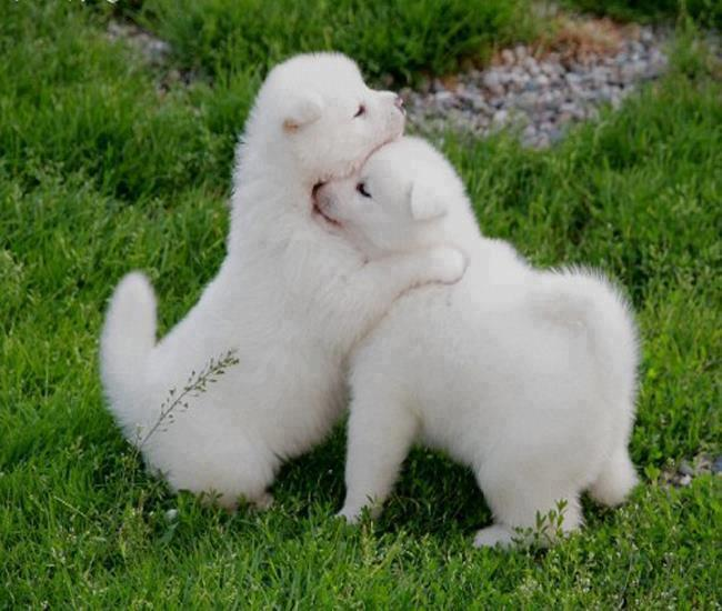 dog pictures gallery