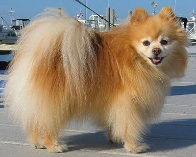 beautiful dog pictures images