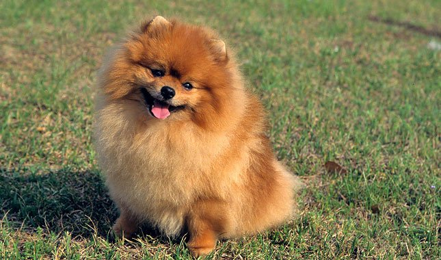 beautiful dog pictures download