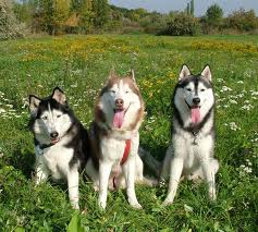 most beautiful dog pictures