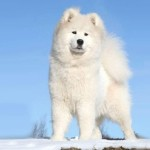 cute beautiful dog pictures