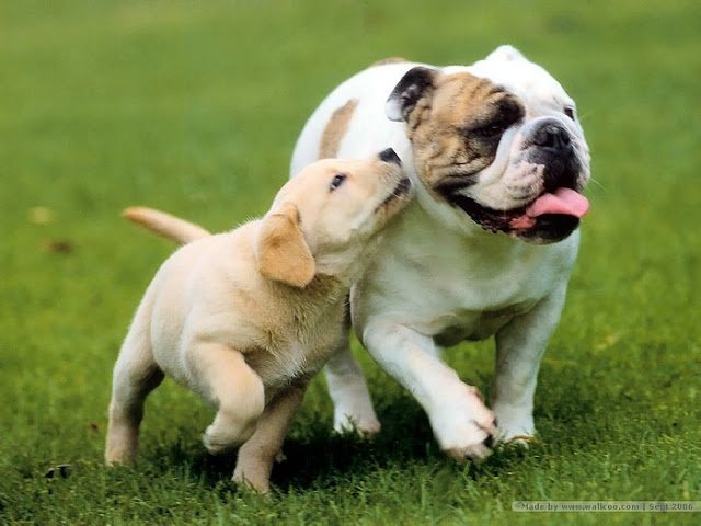all beautiful dog pictures