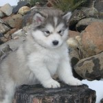 beautiful small dogs