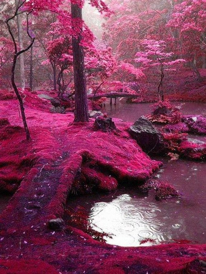 The+garden+of+Saiho+Ji+in+Kyoto,+Japan_(1)