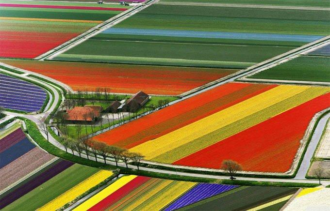 tulip-fields-amsterdam(1)