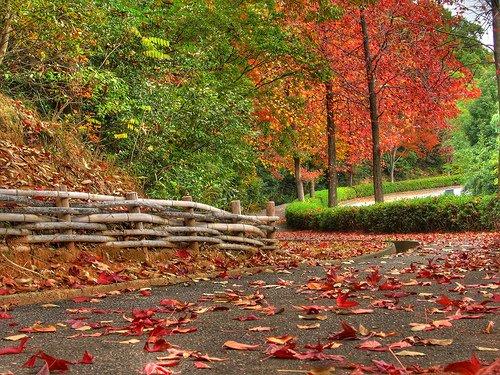 Fall10