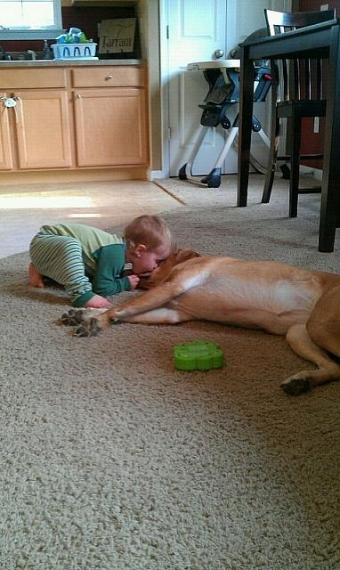 Happy accompanied moments of cute kids and pet dogs (15)
