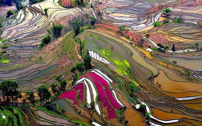 terraced-rice-field-china
