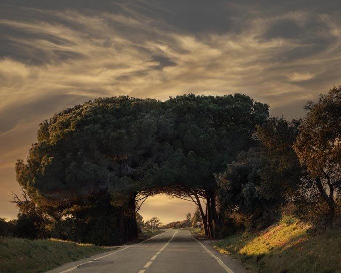 treeportugal