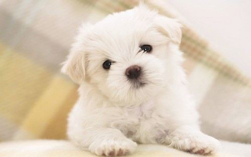 cutest-puppies-14
