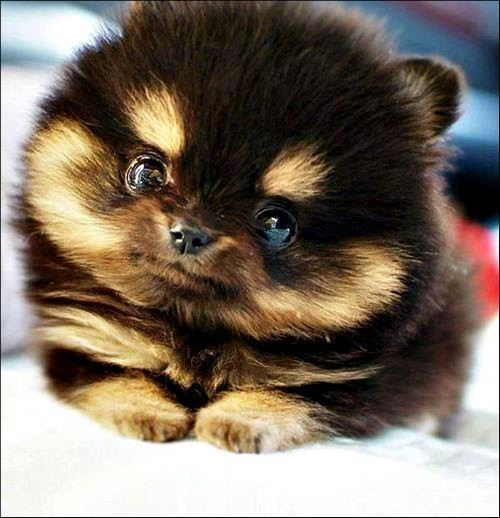 cutest-puppies-15