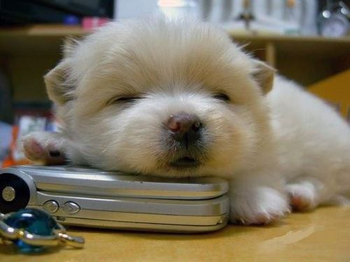 cutest-puppies-17