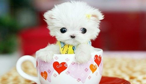cutest-puppies-9