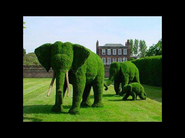 Elephant_Bushes